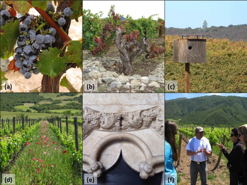 Ecosystem services decanted: Wine regions as multi-functional areas
