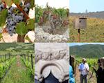 Ökosystemleistungen dekantiert: Weinbaugebiete als multifunktionale Landschaften