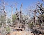 Analyse der Präferenzen von Anbietern und Nachfragern für Zahlungen für Ökosystemdienstleistungen für eine nachhaltige Landnutzung in Madagaskar