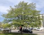 Integration ökosystem-basierter Maßnahmen in Klimaanpassungsstrategien deutscher Großstädte