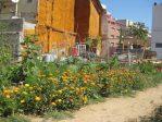 Die Bedeutung von urbanen Gärten für den Erhalt von Ökosystemleistungen