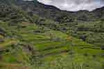 Folgen von Klima- und Landnutzungswandel für die Reisproduktion in Südostasien