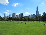 Wie hängen Biodiversität und Ökosystemleistungen in Städten zusammen?
