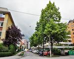 Wie lassen sich aus Baumkatasterdaten klimatische Regulationsleistungen ableiten?