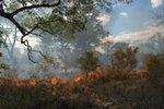 Wege weisen im Dschungel der Regelung von Ökosystemleistungen