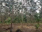 Land im Wandel – Wie reagiert Myanmar's ländliche Bevölkerung auf veränderte Ökosystemleistungen?