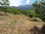 Die Förderung von Ökosystemleistungen in ökologisch bewirtschafteten Obstplantagen in Südafrika